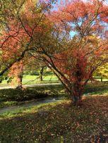 Autumn_10
