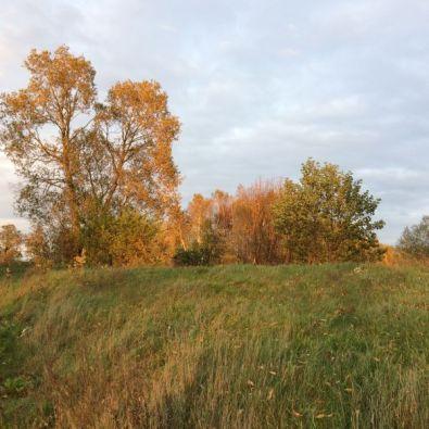 Autumn_17